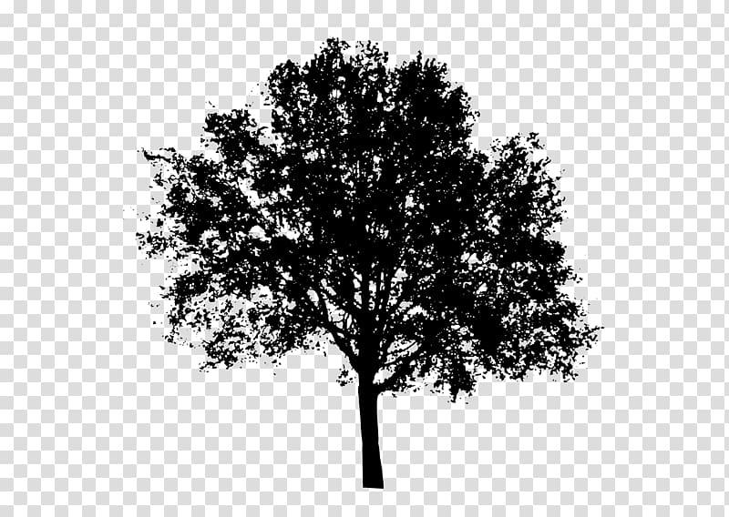 Black tree illustration, Tree Silhouette , tree transparent.