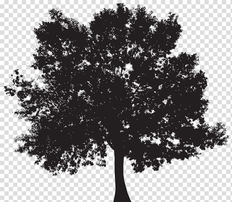 Black tree illustration, Silhouette Tree , Tree Silhouette.