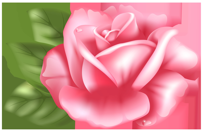 Pink Rose Clipart Transparent Background.