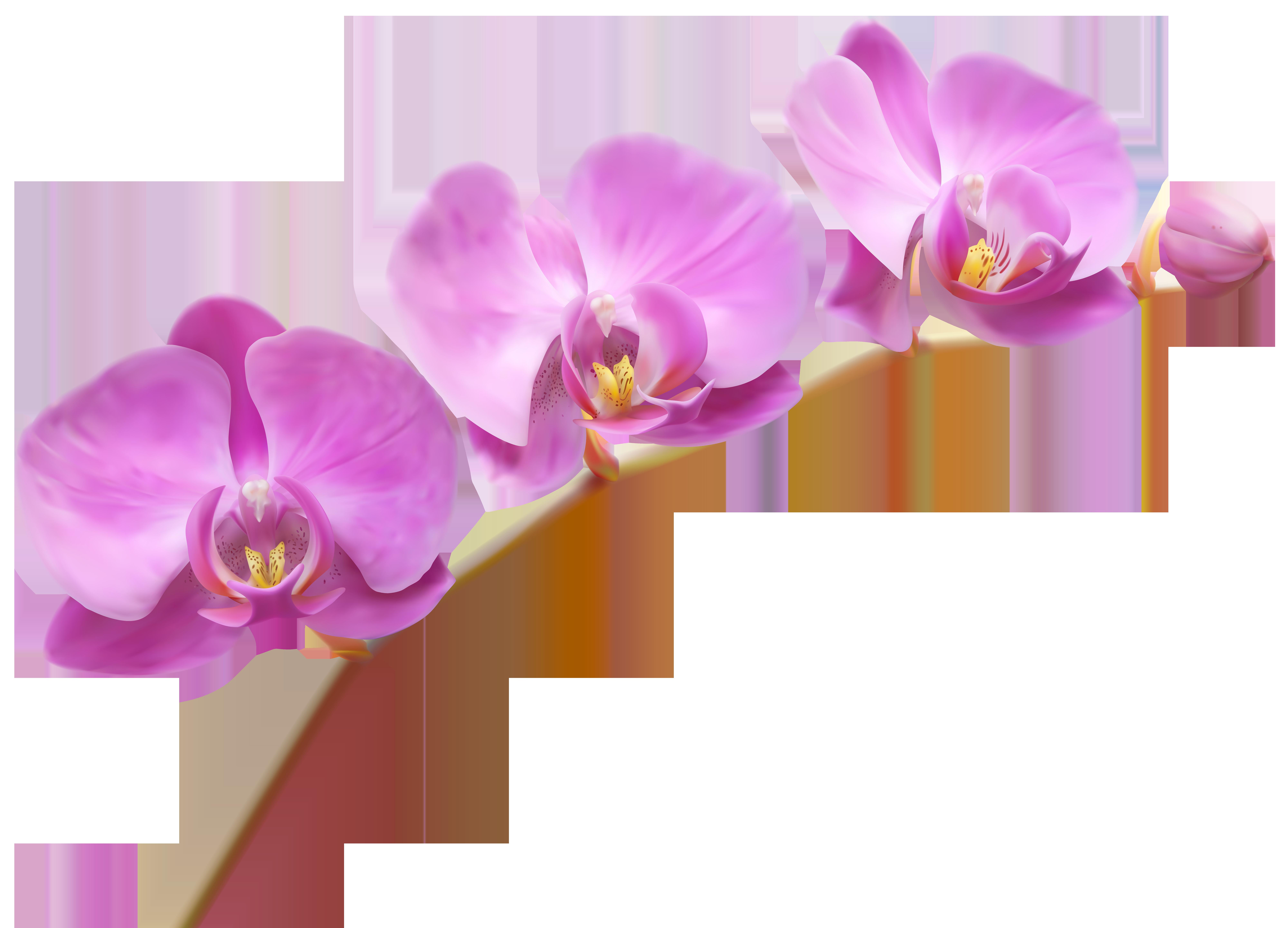 Orchids Transparent PNG Clip Art Image.