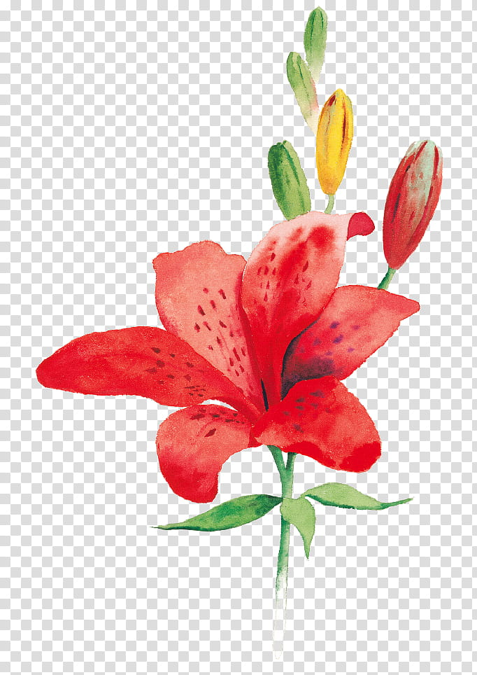 Like a Flower a Tree, red lily flower art transparent.