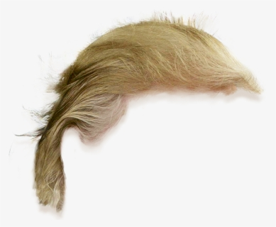 Free Trump Hair Clip Art with No Background.