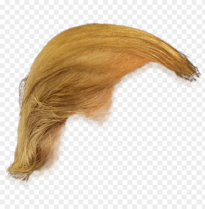 donald trump hair transparent PNG image with transparent.