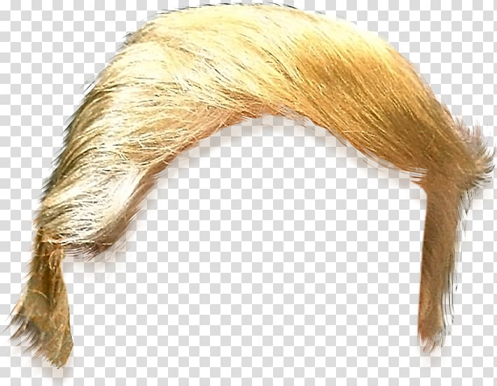 Blonde hairstyle, United States Trump Hair , hairstyle.