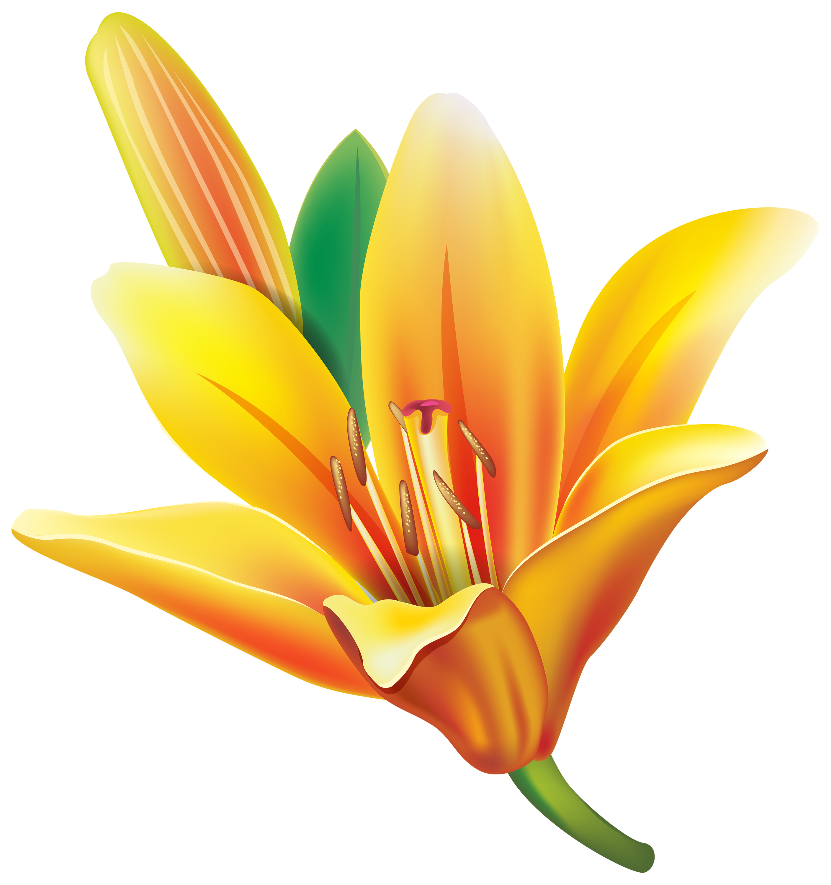 Yellow Lily Flower PNG Clipart.
