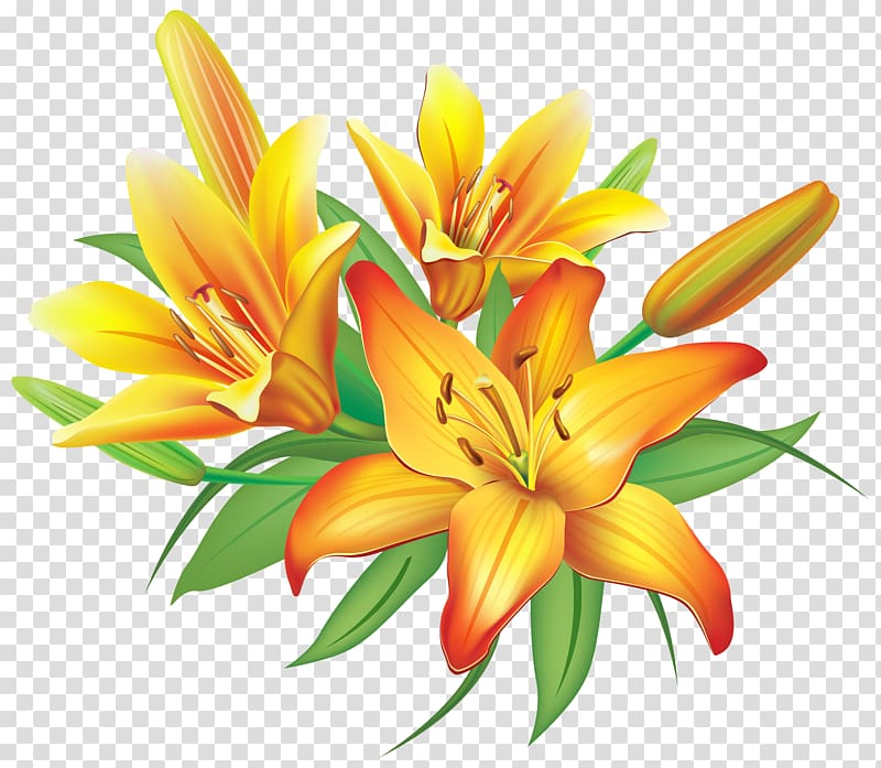 Flower Yellow , Yellow Lilies Flowers Decoration , orange.