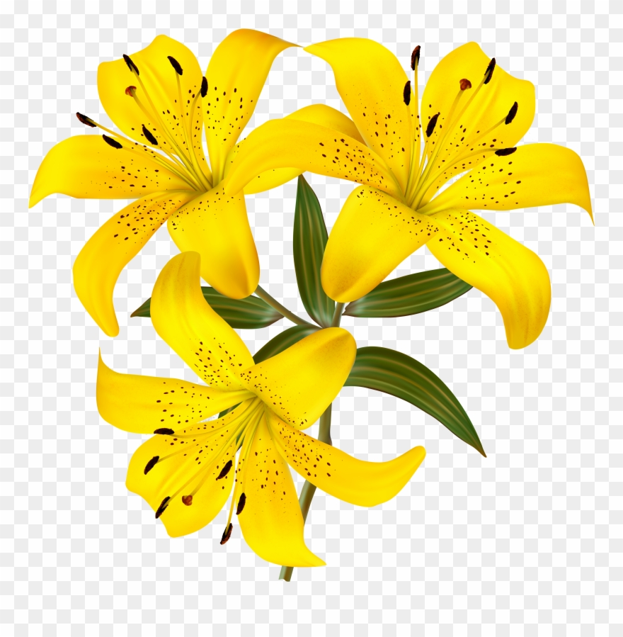 Yellow Lilies Png Clipart Picture Gallery Yopriceville.