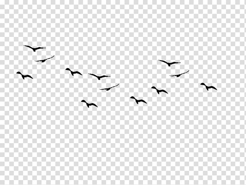 Bird flight Bird flight Flock Bird migration, Birds Pic.