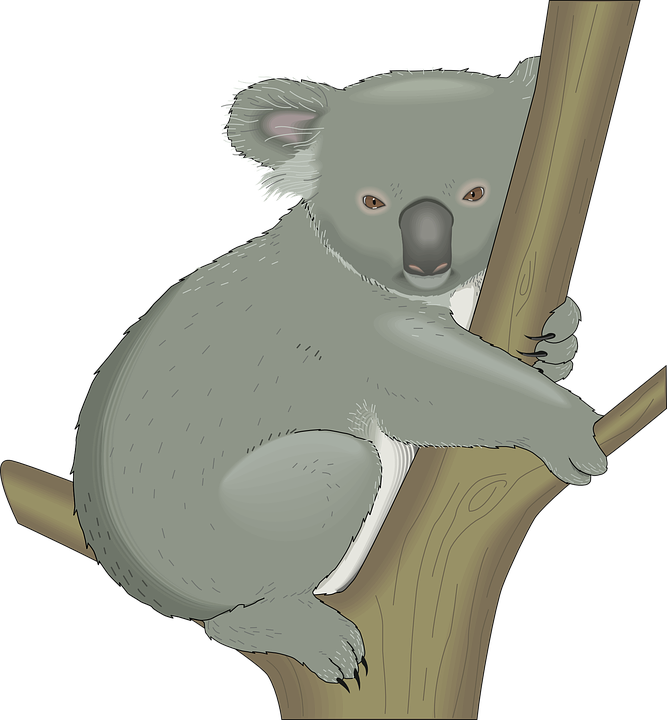 Free vector graphic: Koala, Australia, Tree, Hug, Branch.