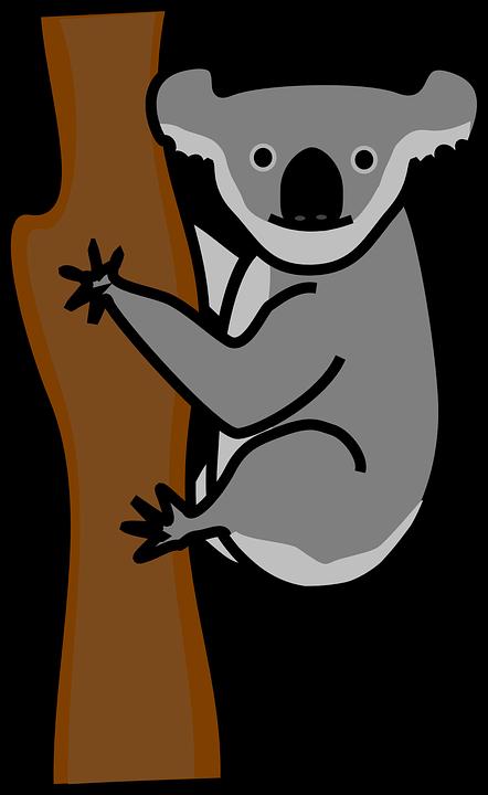 Koala, Bear.
