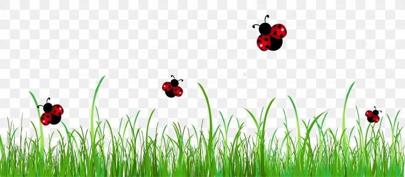 Ladybird Stock Photography Clip Art, PNG, 3427x1506px.