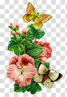 Vintage flower , butterflies on flower transparent.