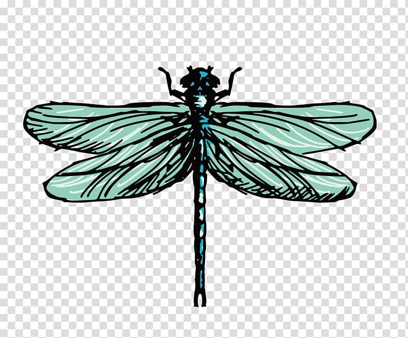 Drawing Dragonfly Illustration, dragonfly transparent.