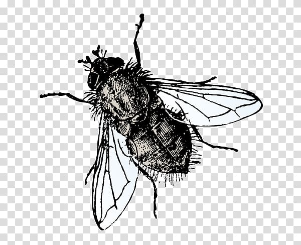 Insect Microsoft PowerPoint Fly Presentation slide, flies.