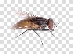 Black garden ant , ant transparent background PNG clipart.