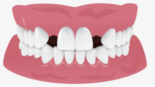 White Teeth Tooth Hd Image Free Png Clipart.