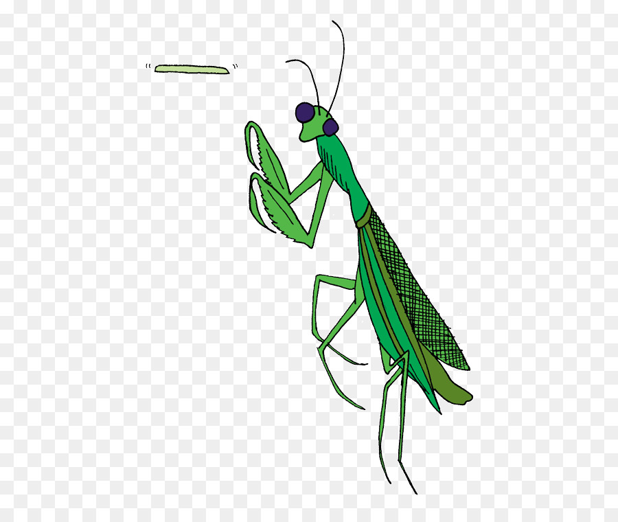 Mantis Insect png download.