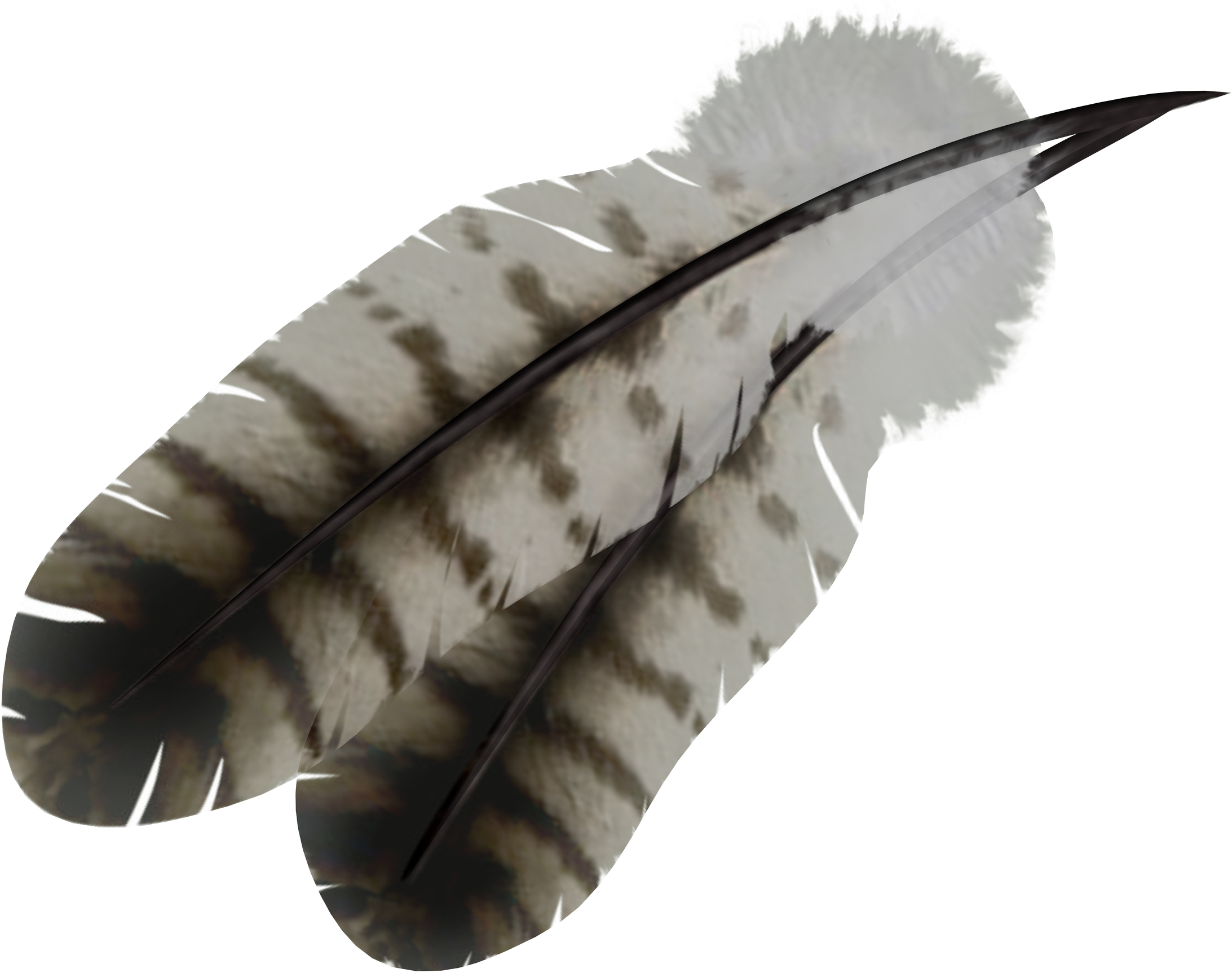 Feathers clipart feather indian, Feathers feather indian.
