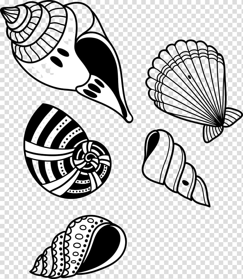 Seashell Conch, Conch shell transparent background PNG.
