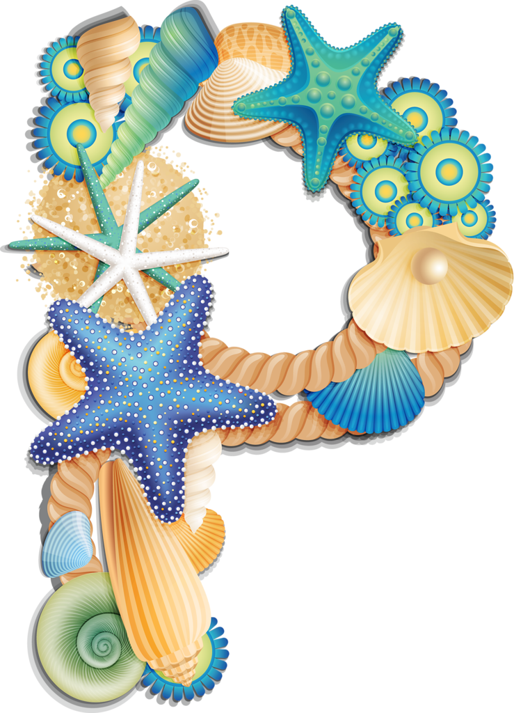 Seashells clipart beach item, Seashells beach item.