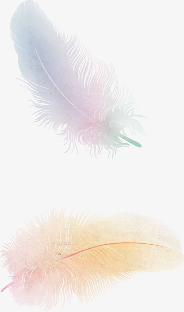 Feather, Floating Feather, Fine Feathers PNG Transparent.