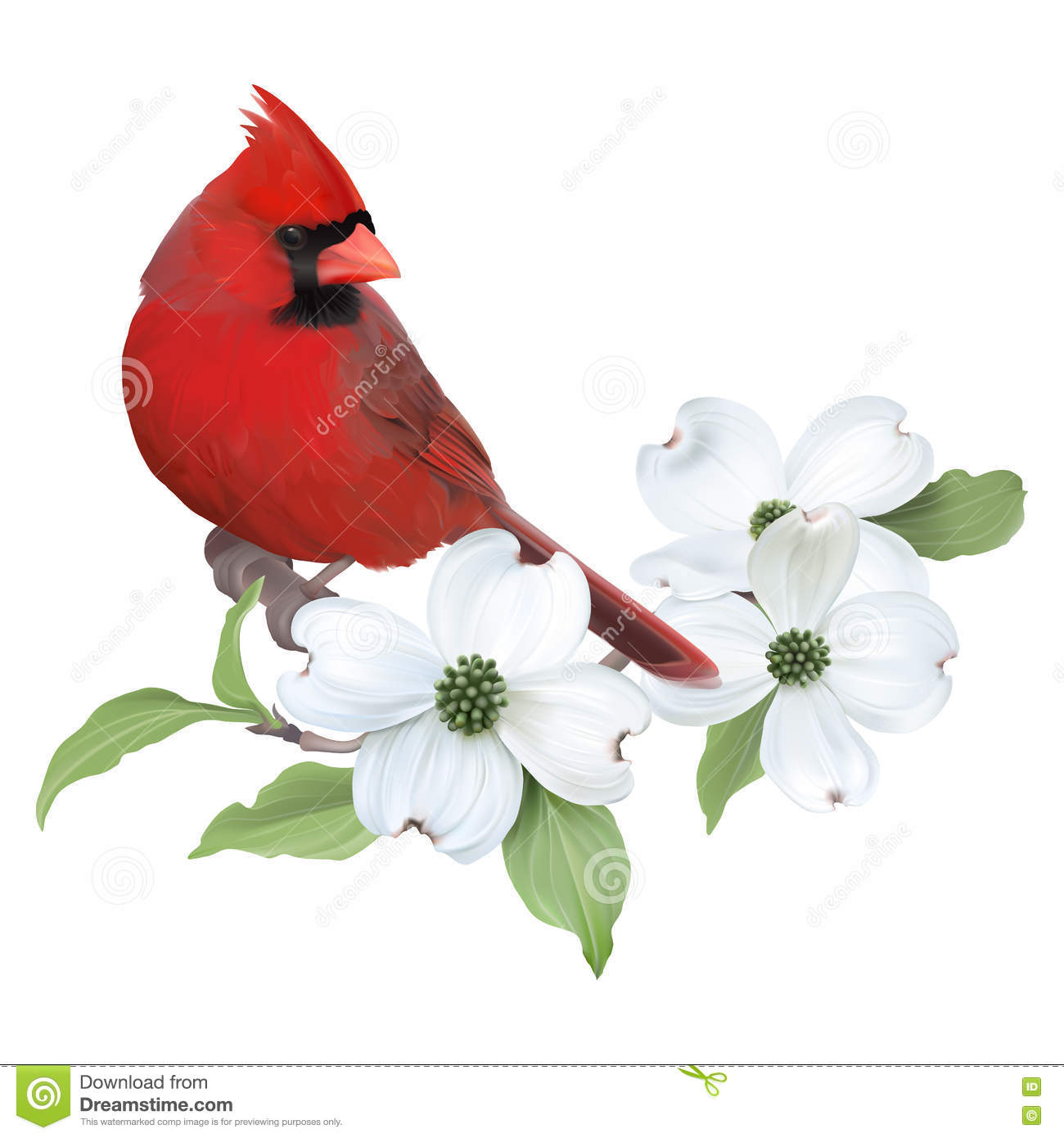 Cardinal Clipart Transparent.