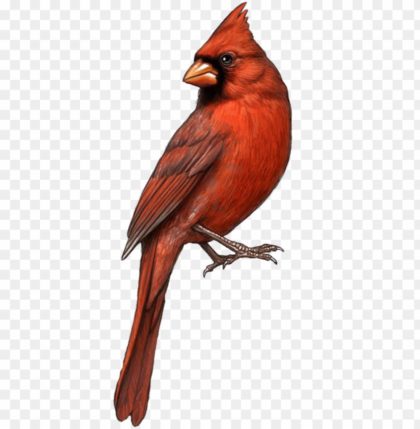 cardinal clipart tiny bird.