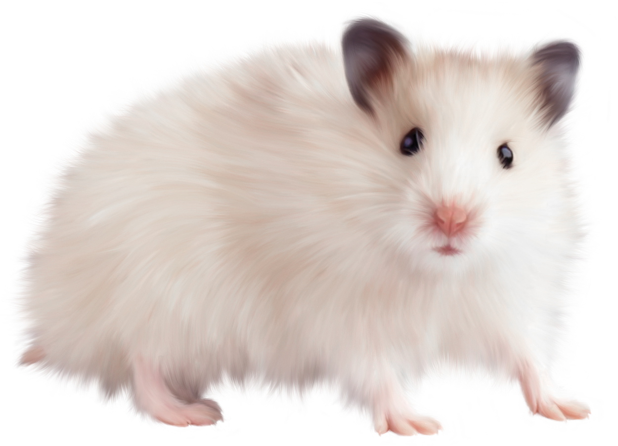 Transparent Mouse PNG Picture.