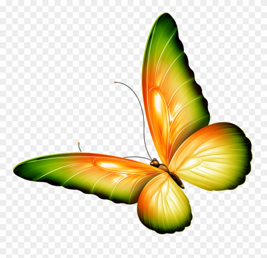 Butterfly Clip Art With.