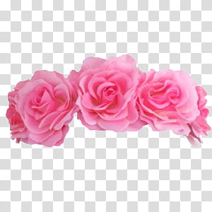 Flower Crowns, pink roses illustration transparent.