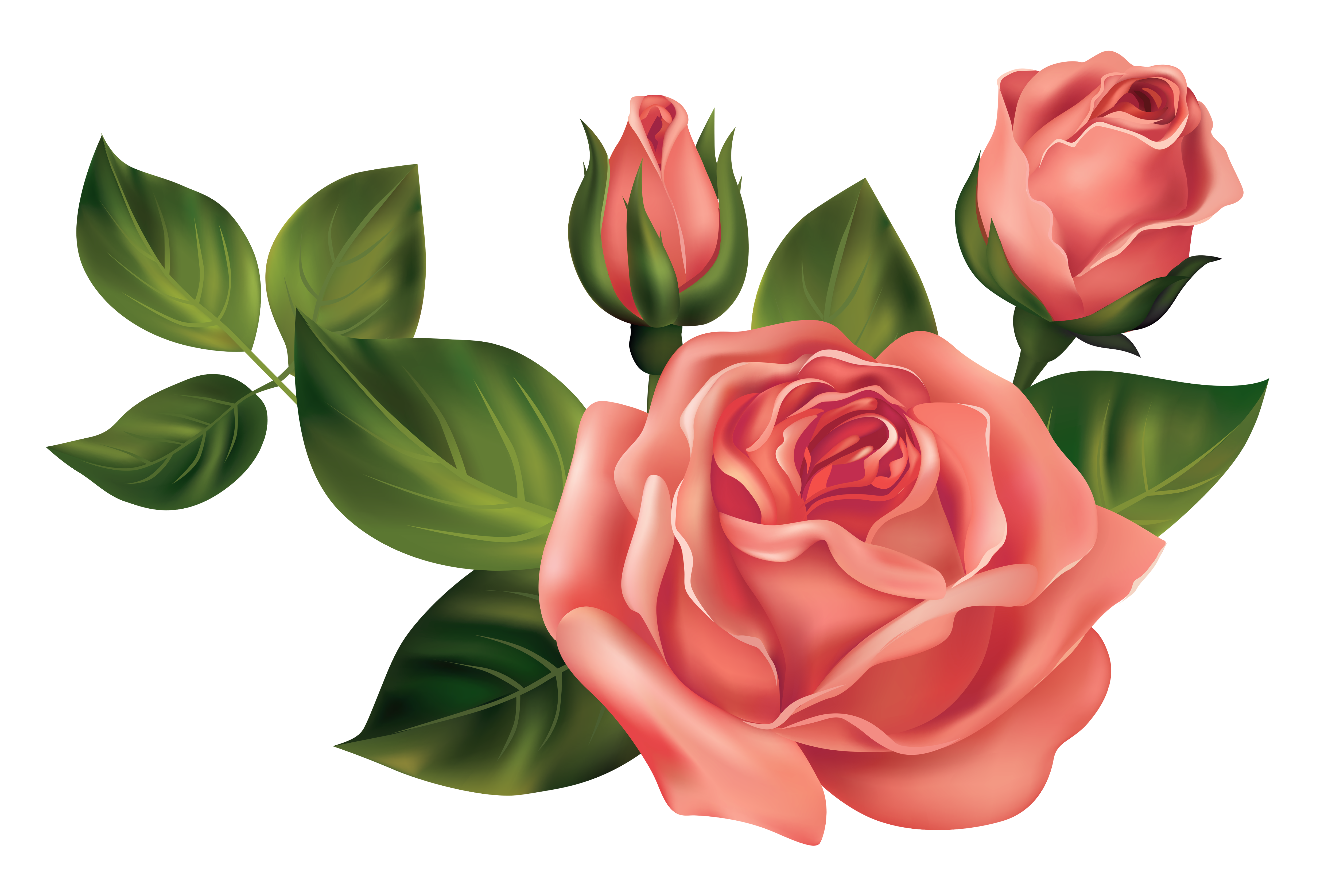 Transparent Roses PNG Clipart Picture.
