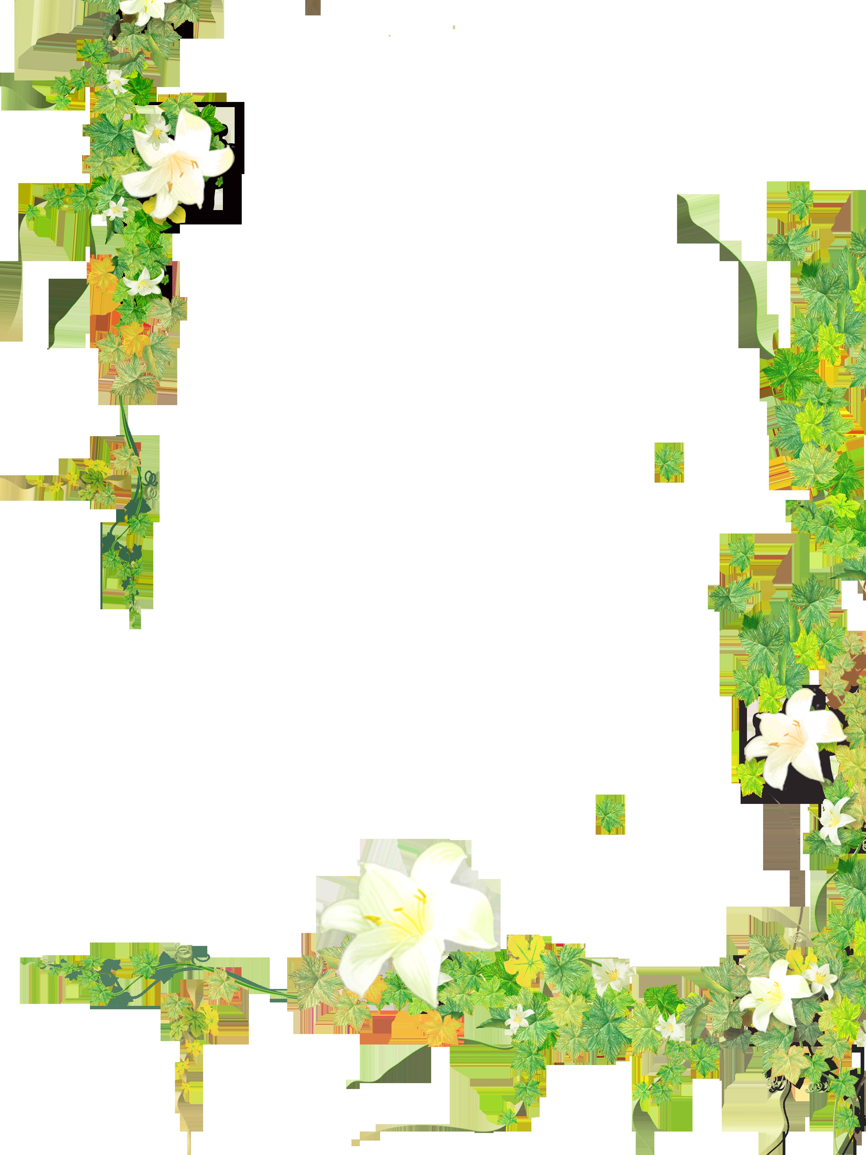 Leaf Plant Flower Vine.