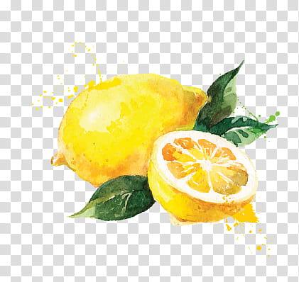lemon fruits illustration transparent background PNG clipart.