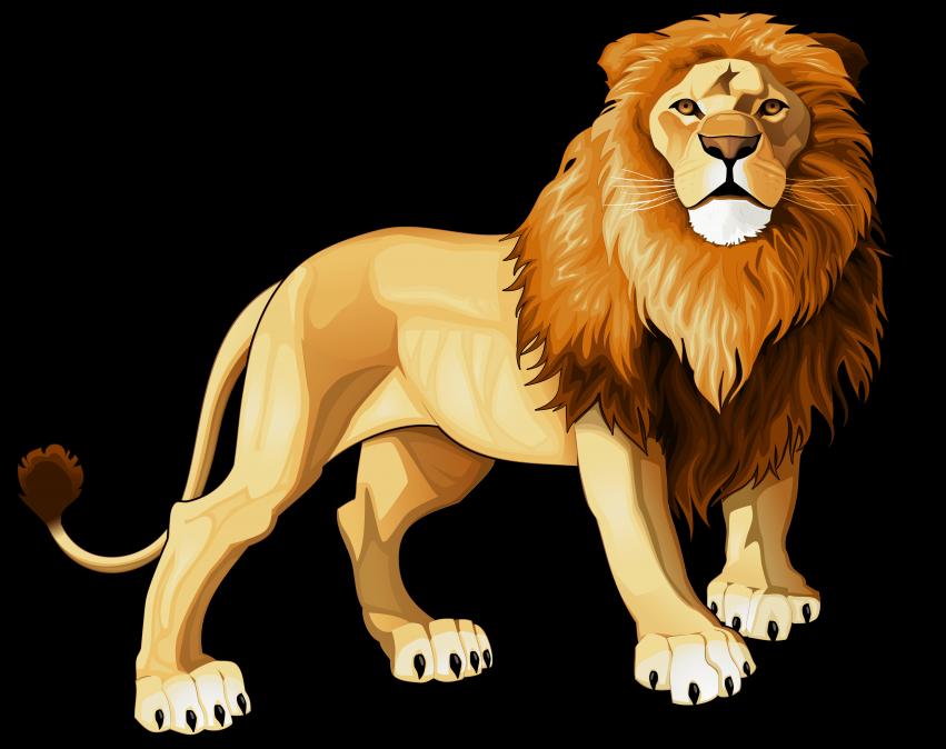 Lions clipart transparent background, Lions transparent.