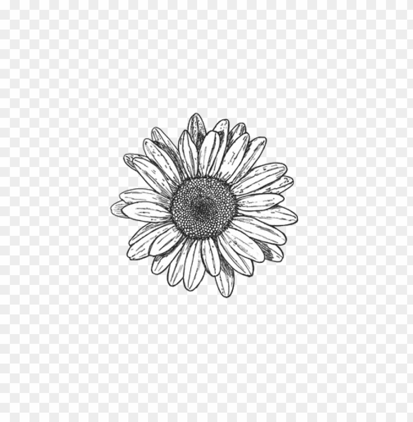 sunflower png tumblr PNG image with transparent background.