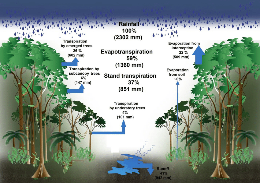 Water balance of the terra firme forest of the present study.