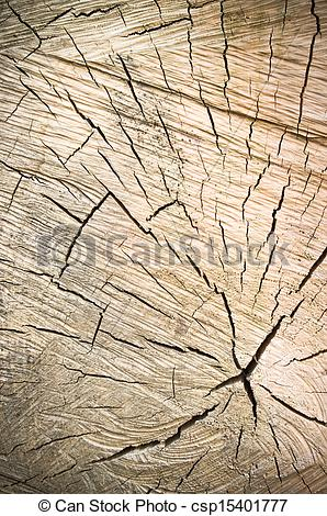 Picture of transverse cutting of an old dry wood.