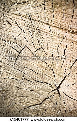 Picture of transverse cutting of an old dry wood k15401777.