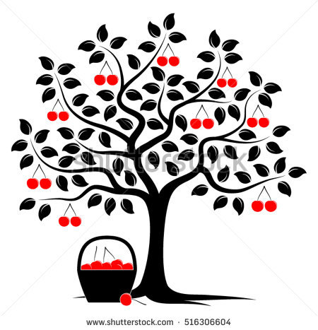 Cherry Tree Stock Photos, Royalty.