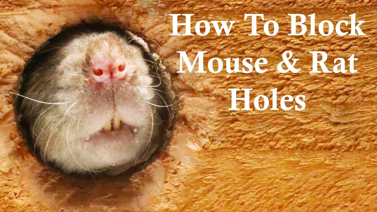 The Best Ways To Block Mouse/Rat Holes. Keep Rats Out of Your House.  Mousetrap Monday.