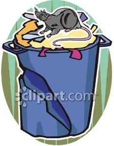 Rat Going Through Garbage.