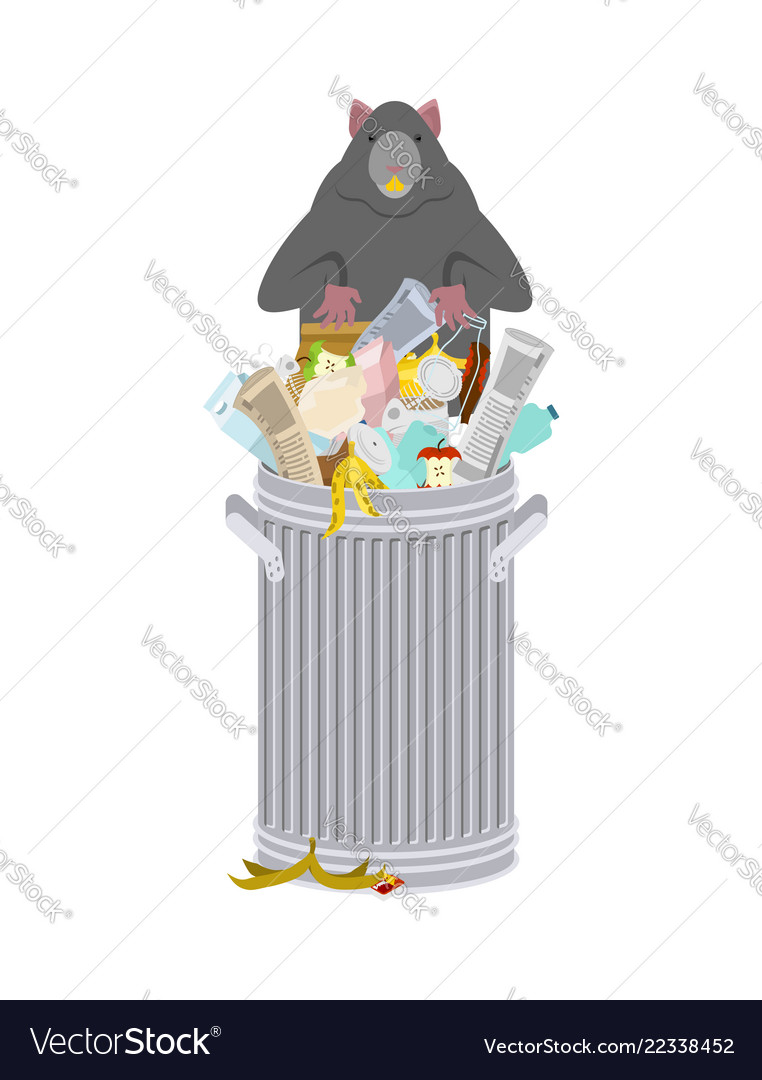 Rat in garbage can rodent in trash big mouse in.