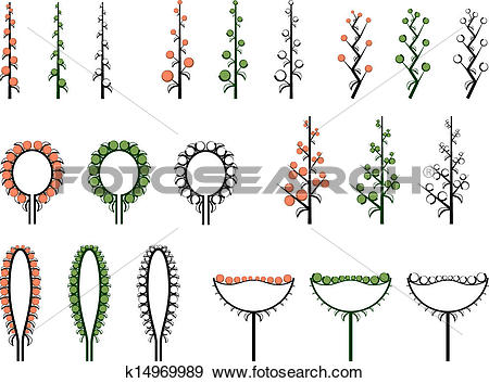 Clip Art of Set types of inflorescence. k14969989.