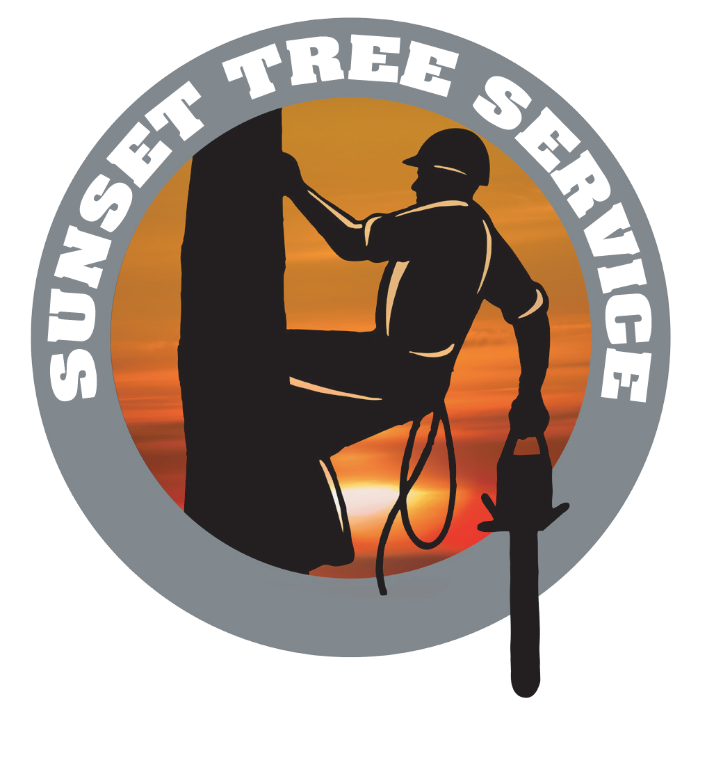 Arborists in Traverse City, Michigan.