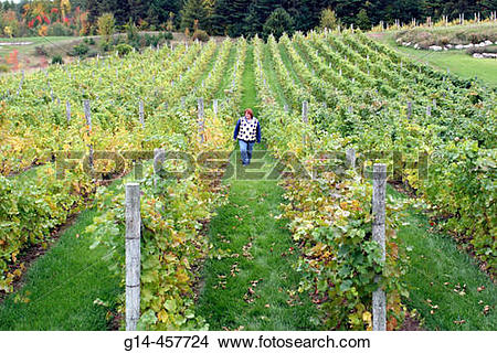 Stock Photo of Willow Vineyards, female walking, rows, vines.