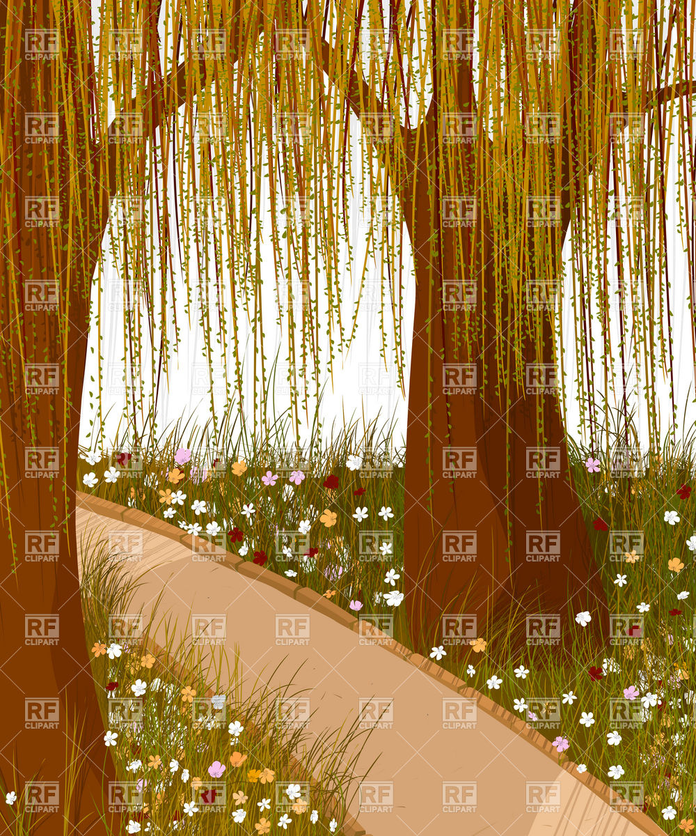 Willow forest and alley Vector Image #12594.