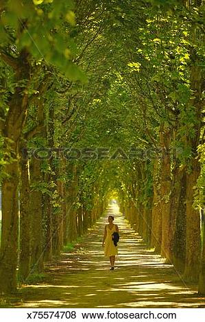 Pictures of Woman walking down a tree lined path, France x75574708.