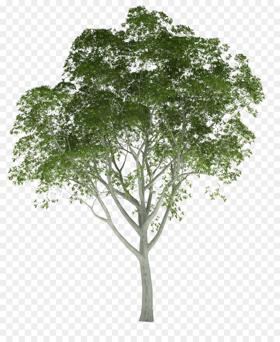 Architecture Tree clipart.