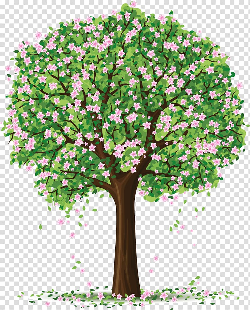 Tree Spring , Spring Trees transparent background PNG.