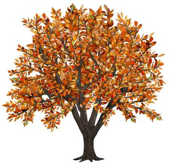 Apple tree fall clipart.